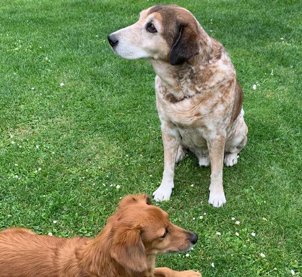 Hundefreunde von Jennifer Mika-pohn